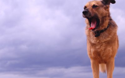 The Perfect Storm & Fireworks Remedies for your nervous dog.