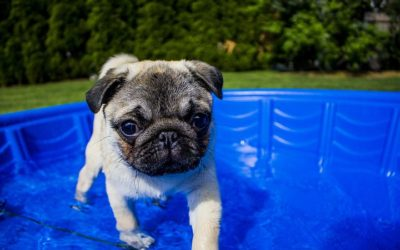 Hot Diggity Dog: Summer Safety Tips
