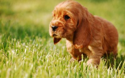 5 Easy Steps For Toilet Training Your Puppy & Solutions For Accidents