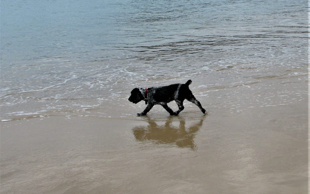 Salt Poisoning in Dogs:  The unseen danger of beach fun