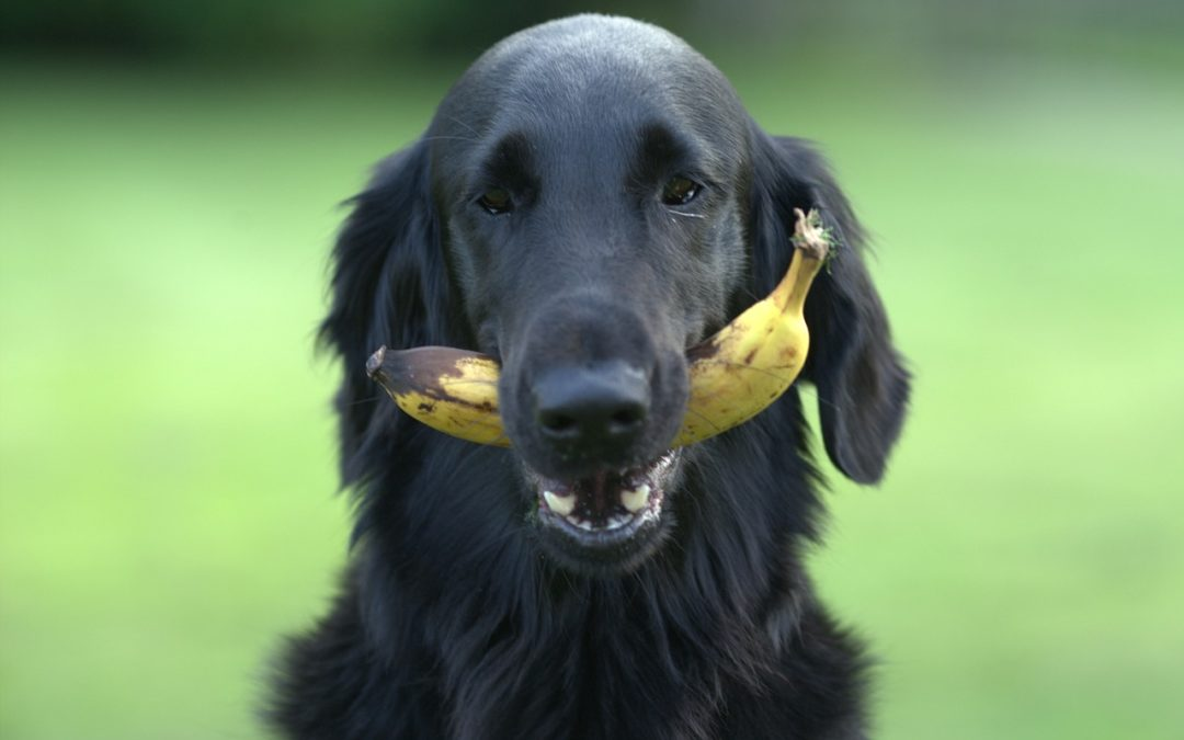 Wash Away Those Sins: Reducing Pesticide Intake in Your Dog